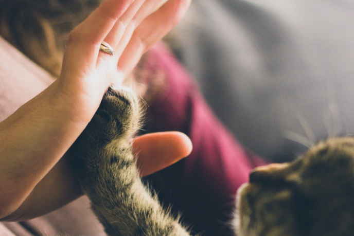 cat paw high five